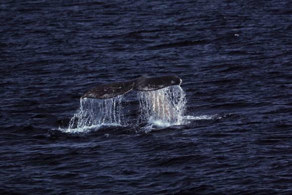 croisière de baleine san diego californie