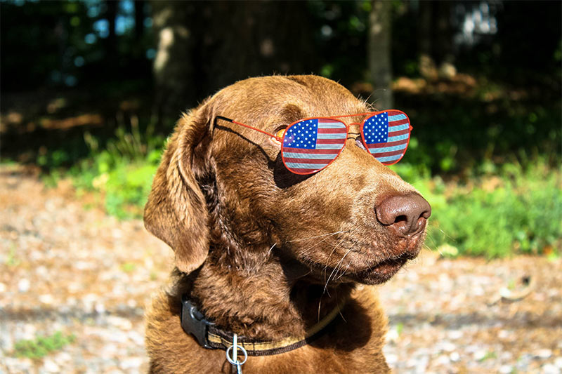 chien lunettes aviator usa