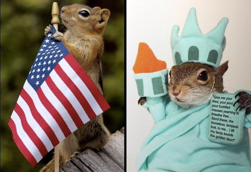 écureuil americain