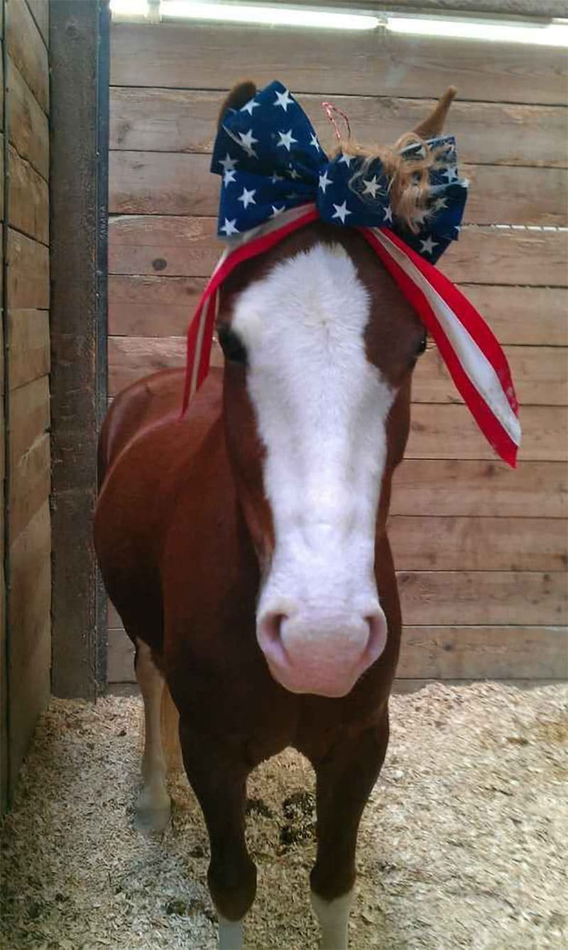 poney patriotique usa