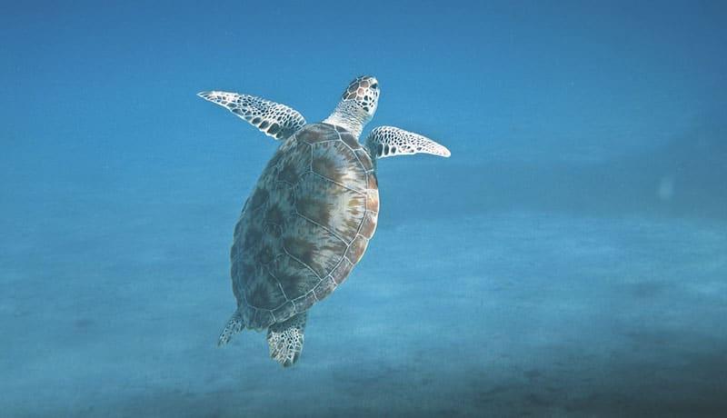 Snorkeling au Mexique