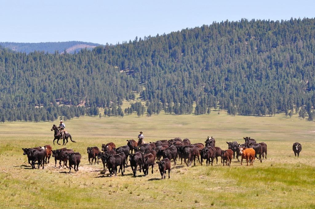 Cowboys dans la Reserve Nationale de Valles Caldera