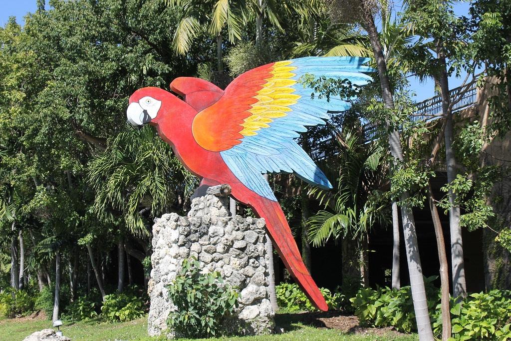 Parrot Jungle Island Miami