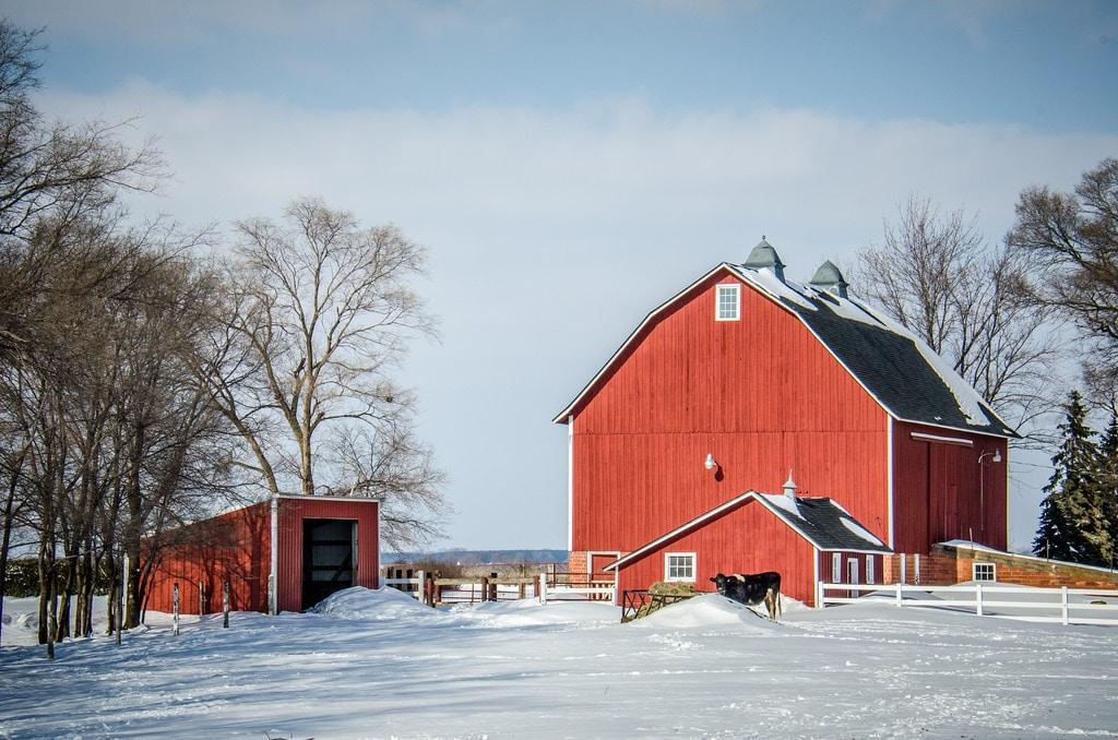 Ferme rouge et vache dans la neige