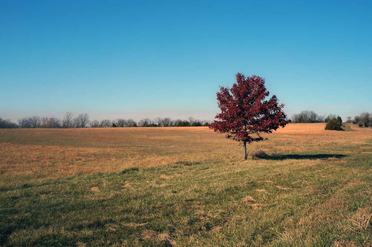 Kansas en Automne