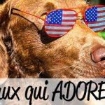 15 animaux qui adorent vraiment les USA