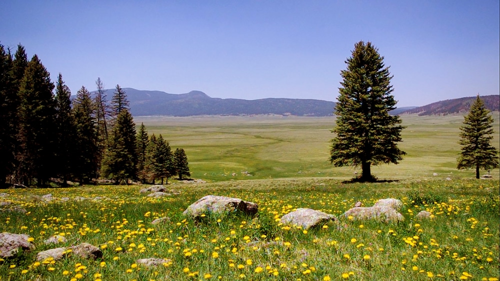 Prairie à Valles Caldera
