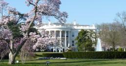 Visiter les cerisiers de la Maison Blanche