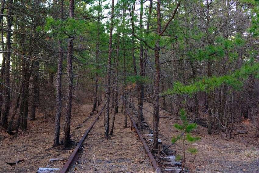 New Jersey Pine Barrens